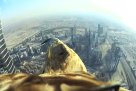 eagle flight dubai