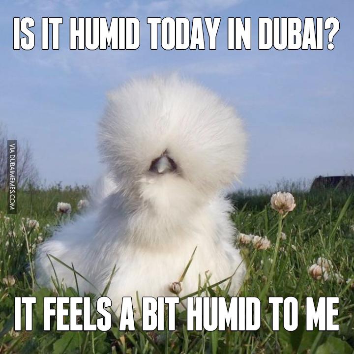 humid dubai