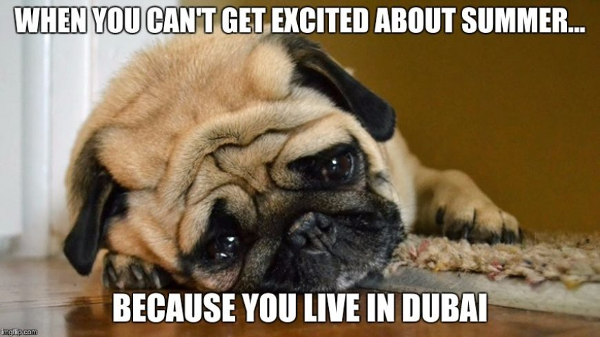 summer dog dubai