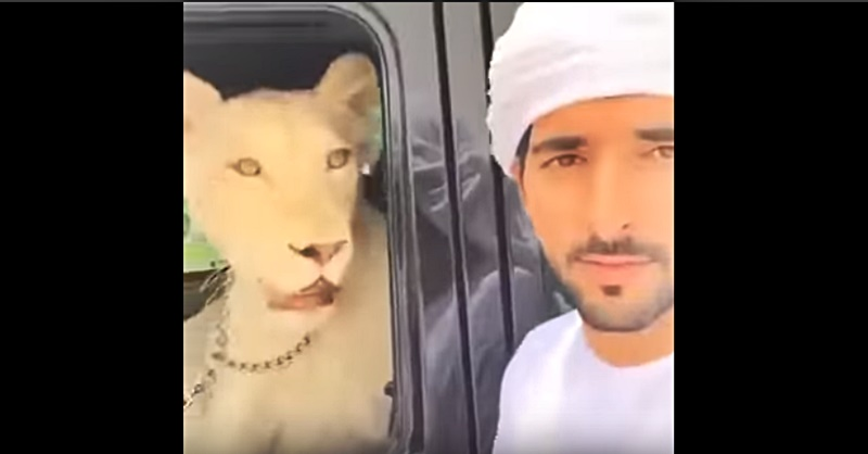 dubai prince hamdan and his pets